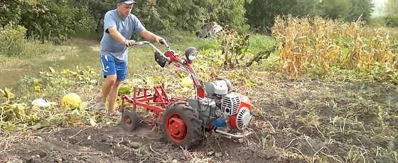 Посадка картофеля мотоблоком Мотор Сич