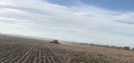Посев озимой пшеницы посевным комплексом Алькор-10