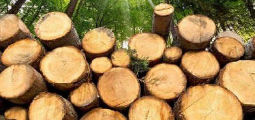 Лесозаготовка в России