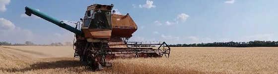 Комбайн Нива СК 5: уборка канадской озимой пшеницы