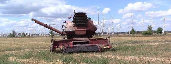 Колос Ск-6 в поле