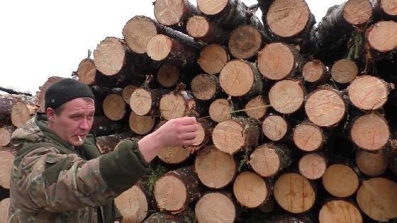 Точковка леса
