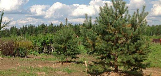 Работы по озеленению коттеджного поселка