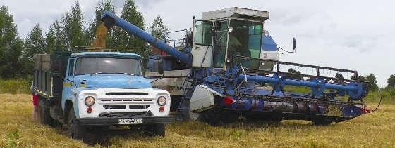 Енисей 1200 1НМ на уборке пшеницы